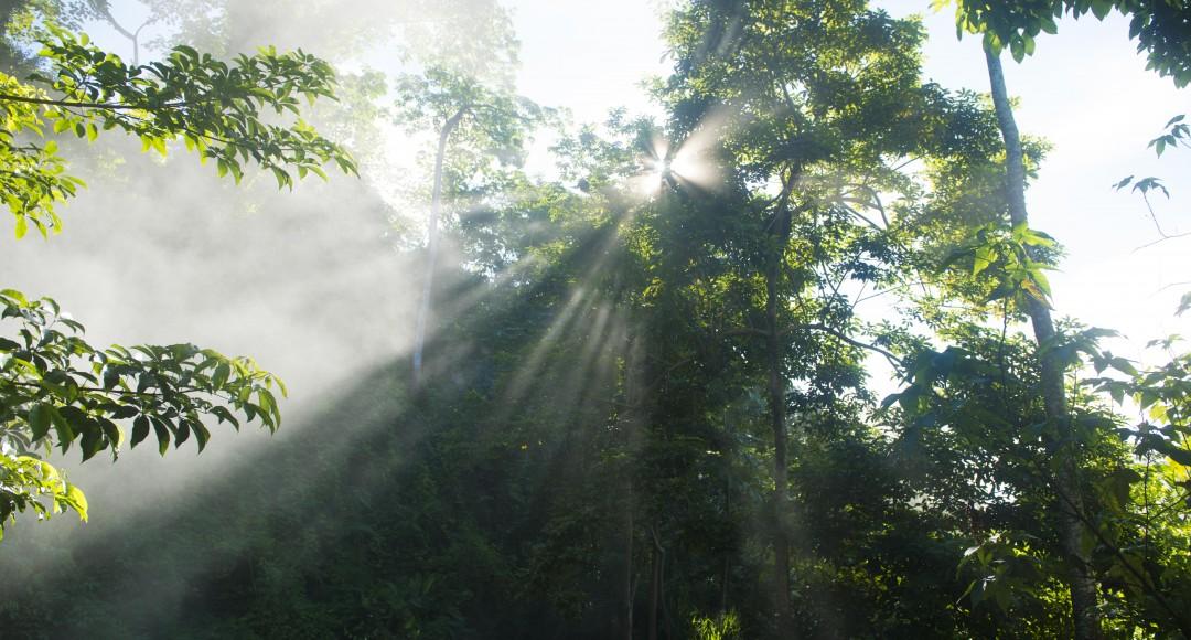 Jungles of Peru
