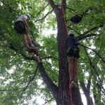 Tree climbing Winnipeg