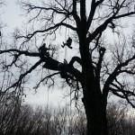 Tree Climbing at SNAC