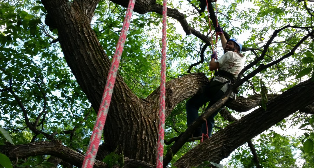 Tree climbing Adventures winnipeg
