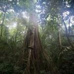Jungles around Mayantuyacu