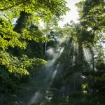 Mayantuyacu Sanctuary