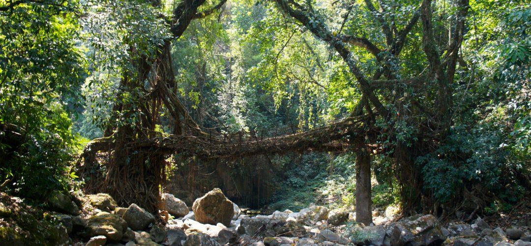 Meghalaya Root Bridges