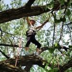 Tree Climbing adventures