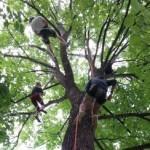 Tree climbing Winnipeg