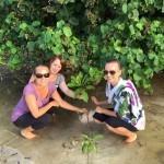 Volunteer Planting Mangroves Maldives