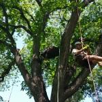 Exploring Trees Winnipeg