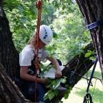 Tree Time in Winnipeg