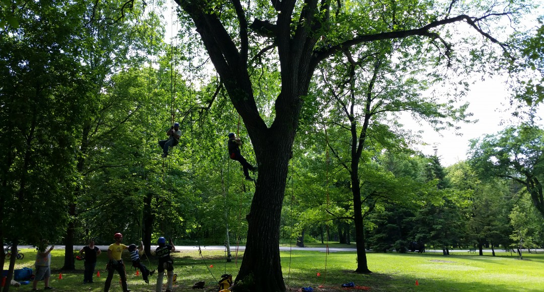 Tree climbing -Adventure climb