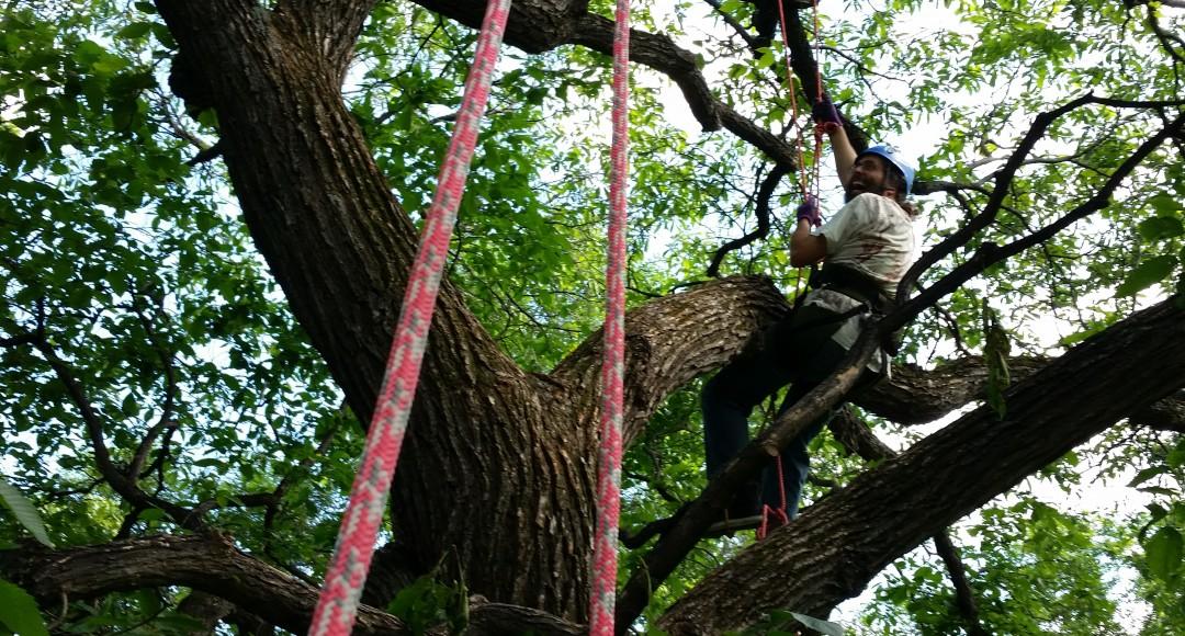 Tree climbing Adventures winnipeg