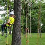 Tree climbing in Winnipeg