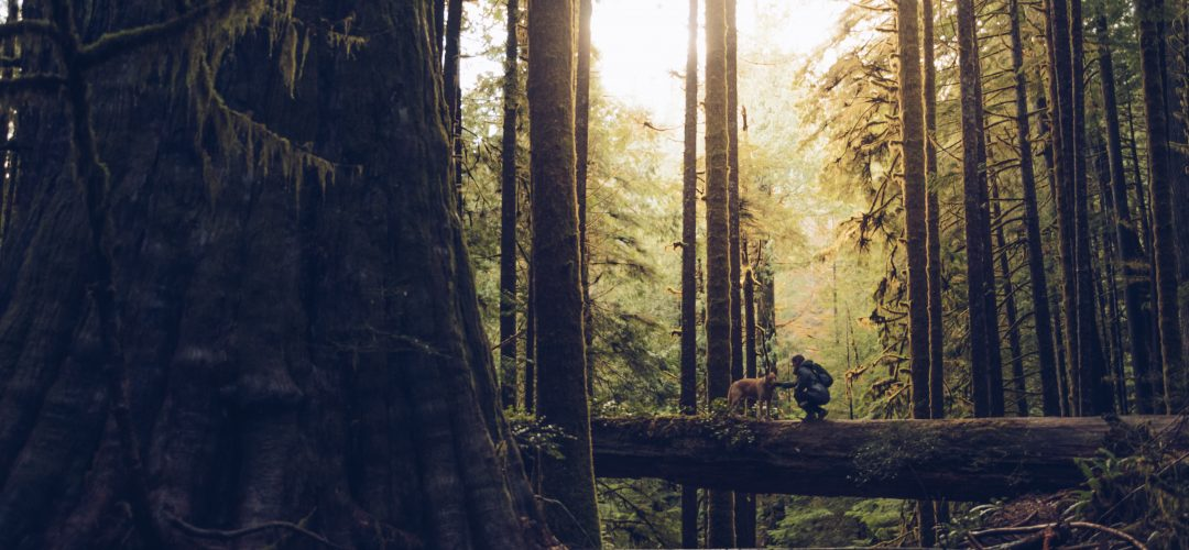 Self-Guided Adventure - Vancouver Island
